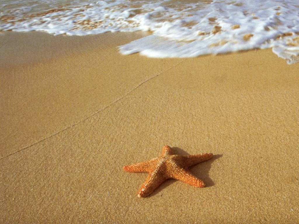 El escritor y las estrellas de mar